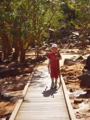 Peregrine with sticks in Katherine Gorge