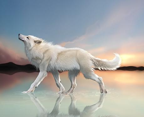 Aquí vivimos!  - Página 28 Lobo+blanco