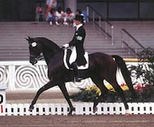 Cavalos de Desporto
