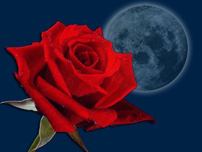 POEMAS SIDERALES ( Sol, Luna, Estrellas, Tierra, Naturaleza, Galaxias...) - Página 16 Rosa+vermelha