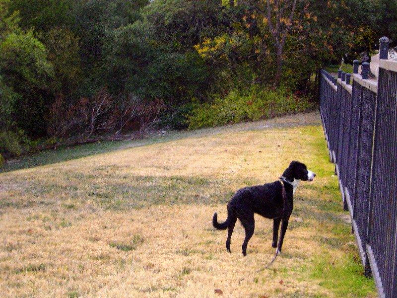 [bales+at+fence]