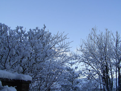 A snowy view from my back garden, South Wales - December 2010.
