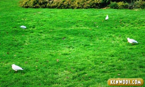 harewood leeds birds