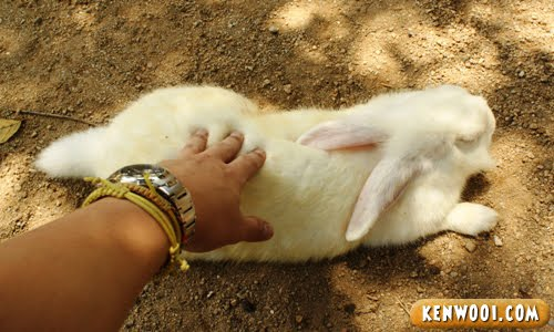 touching a rabbit