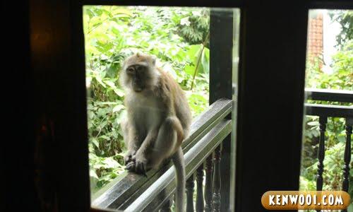 berjaya langkawi monkey