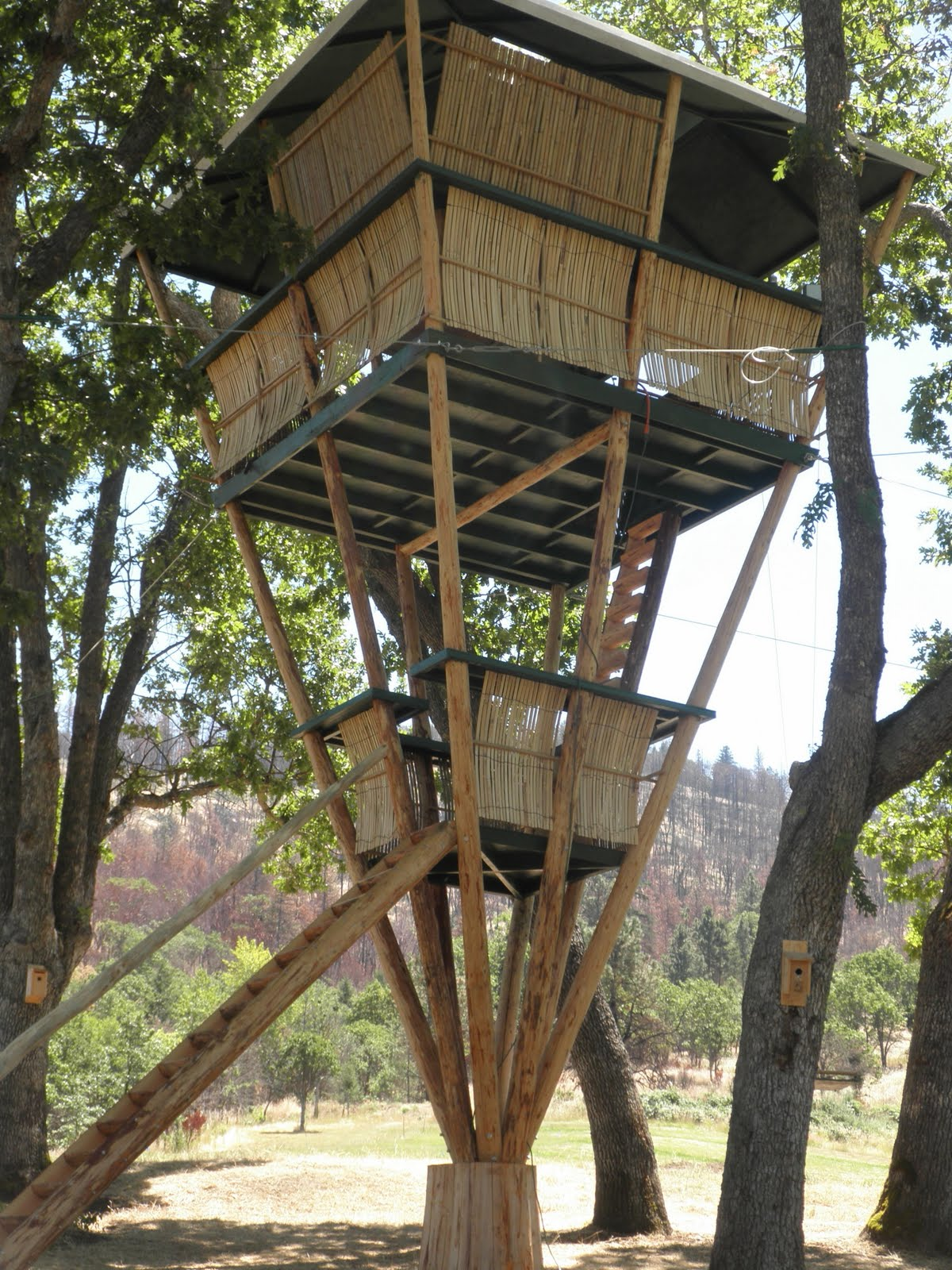 Bamboo treehouse for How to build a treehouse roof