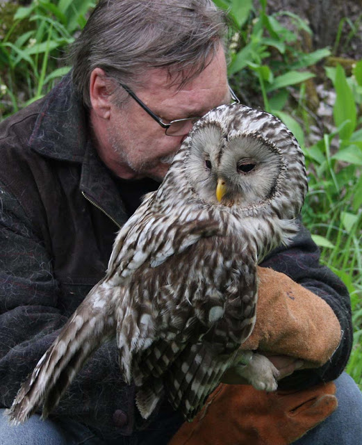 Simon And Karen Spavin Ural Owl