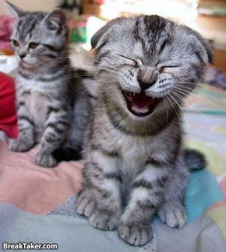 Kucing, gambar kucing, foto kucing, gambar gambar kucing, gambar