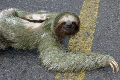 Berikut ini gambar dan foto binatang atau hewan aneh di dunia