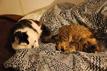 New Zealand Cats