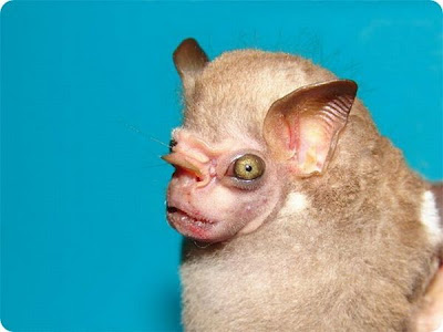 The Strangest and Rarest Animals in the World