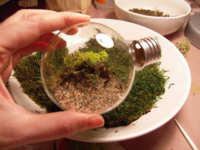 Tiny Terrarium in a Light Bulb