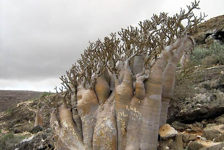Socotra Island 16