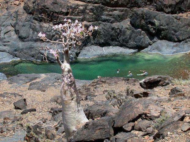 Socotra Island 14