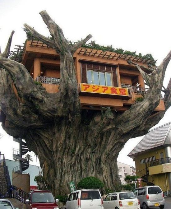 Fresh pics the most unusual restaurants in the world - Cool themed houses ...