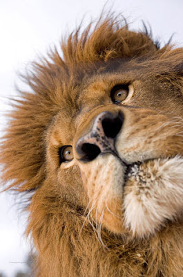 Stunning Close Up Photography Of Wild Animals