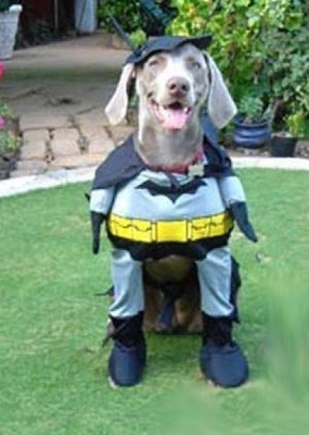 Crazy Halloween Costumes for Dogs