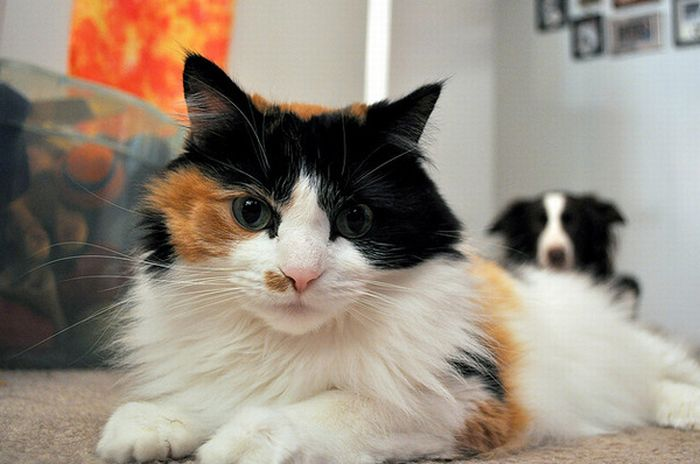 Fresh Pics  25 Pictures Of Cats And Dogs Photobombing Each