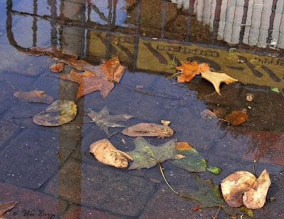 отражение, листья в луже