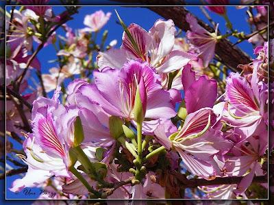 цветы на фоне неба