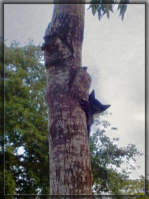 котёнок на дереве