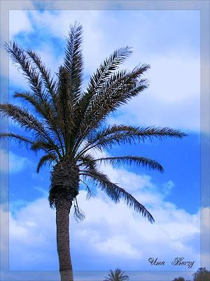 пальма с плодами