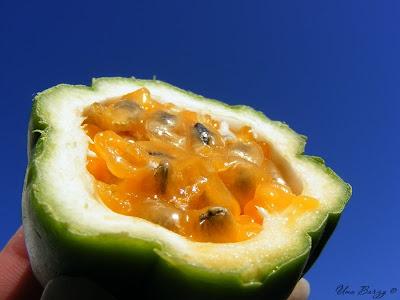 плод пасифлоры в разрезе