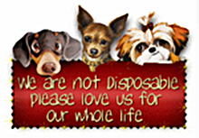 being left behind is the saddest feeling a dog can have, how about adopting one today?