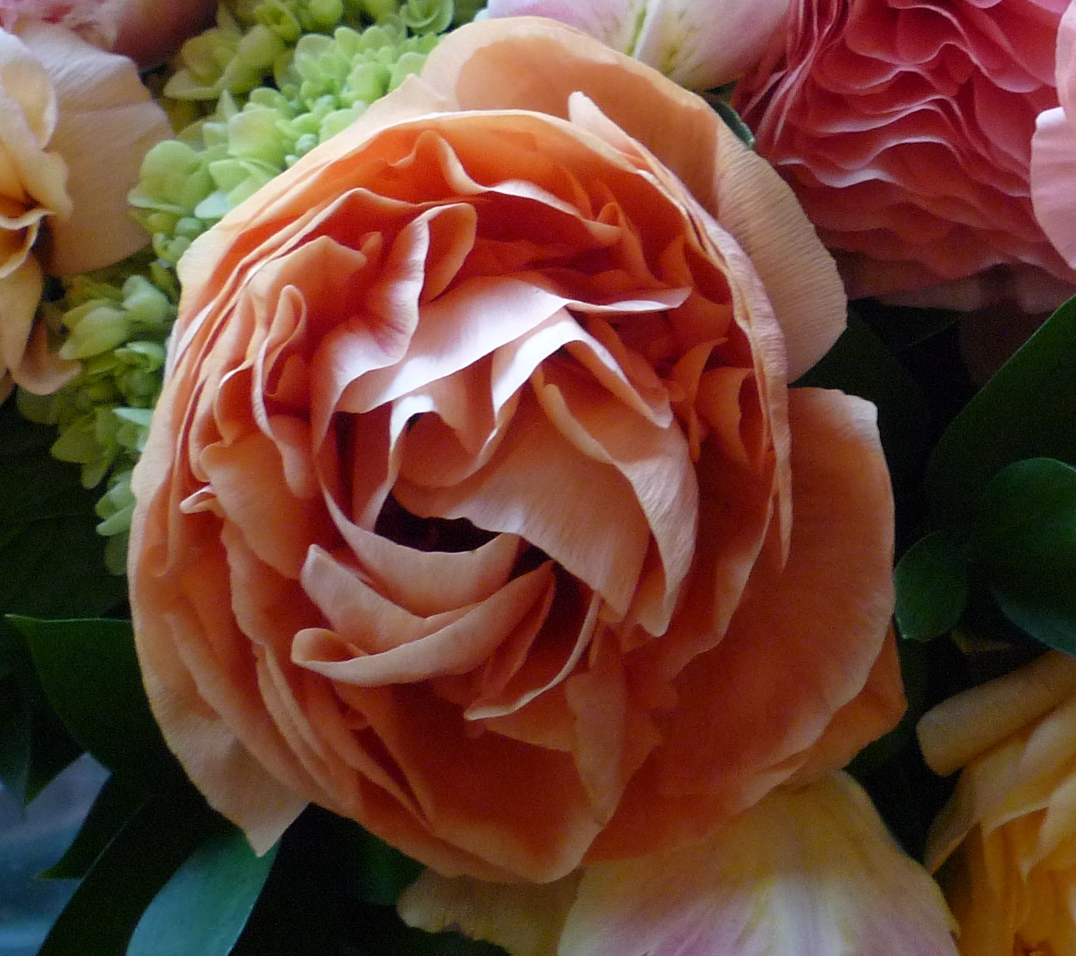 Peach And Apricot Ranunculus