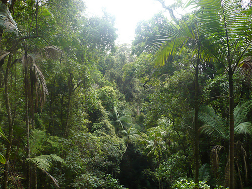characteristics destruction and protection of rain forests Tropical rainforest the tropical rainforest is a kind biome typical of equatorial zones and tropical areas, with abundant rain there are many ways to shelter life from microorganisms to large animal species.