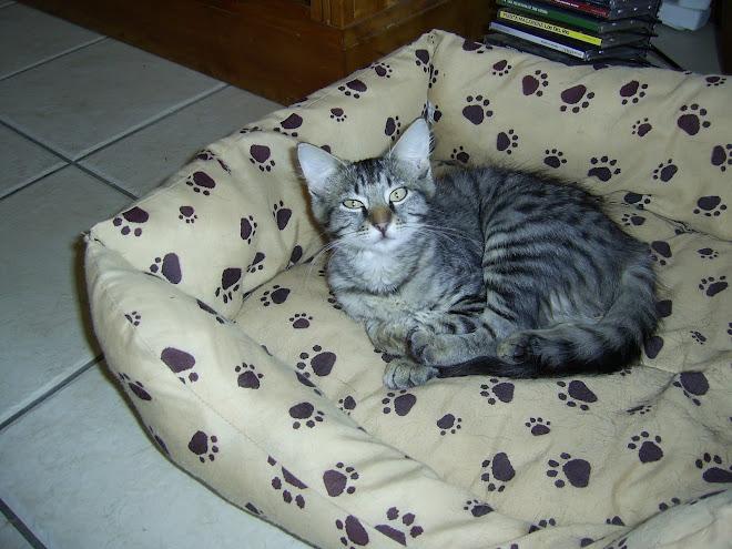 MY CAT MUFFIN