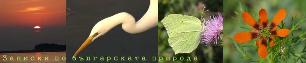 Записки по Българската природа