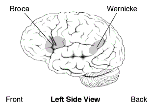 localisation of function Discuss localisation of function in the brain 16 mark essay plan ao1: specific functions originate in certain regions of th brain visual cortex - occipital lobe = processing visual info.