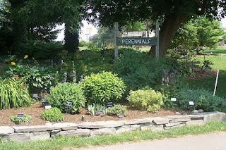 herbacious perennial gardens