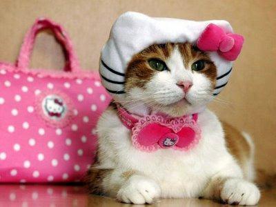 Animales cosplayando Disfraz-gato-hello-kitty