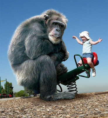 great apes madrid spain human nilo evangelista photoshop world animal rights