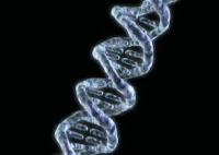 Brin d'ADN. Document Navigenics.