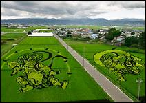 L'art des rizières à Ianakdate.