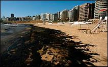 Marée noire sur les plages de Beyrout en août 2006.