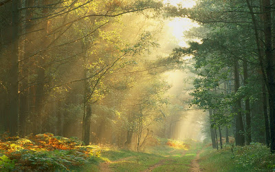 free desktop wallpaper Sun Rays in the Forest Germany
