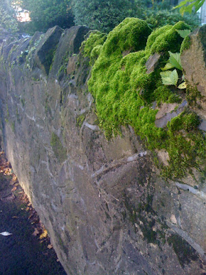 moss covered walls in guildford