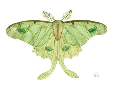 gollybard moth watercolour print