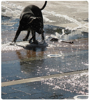 dog trying to drink water from a water fountain, too cute!