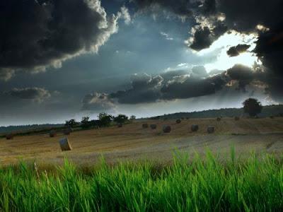 Top Landscape