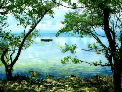 florida keys landscapes