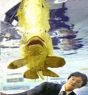 Ikan Emas Bisa Membuat Orang Kaya MendadaO