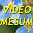 Video Mesum Gegerkan Warga Wonosobo