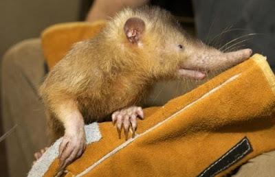 Hewan-hewan Aneh yang Hidup di Bumi ~ Terbaca.com - Gam