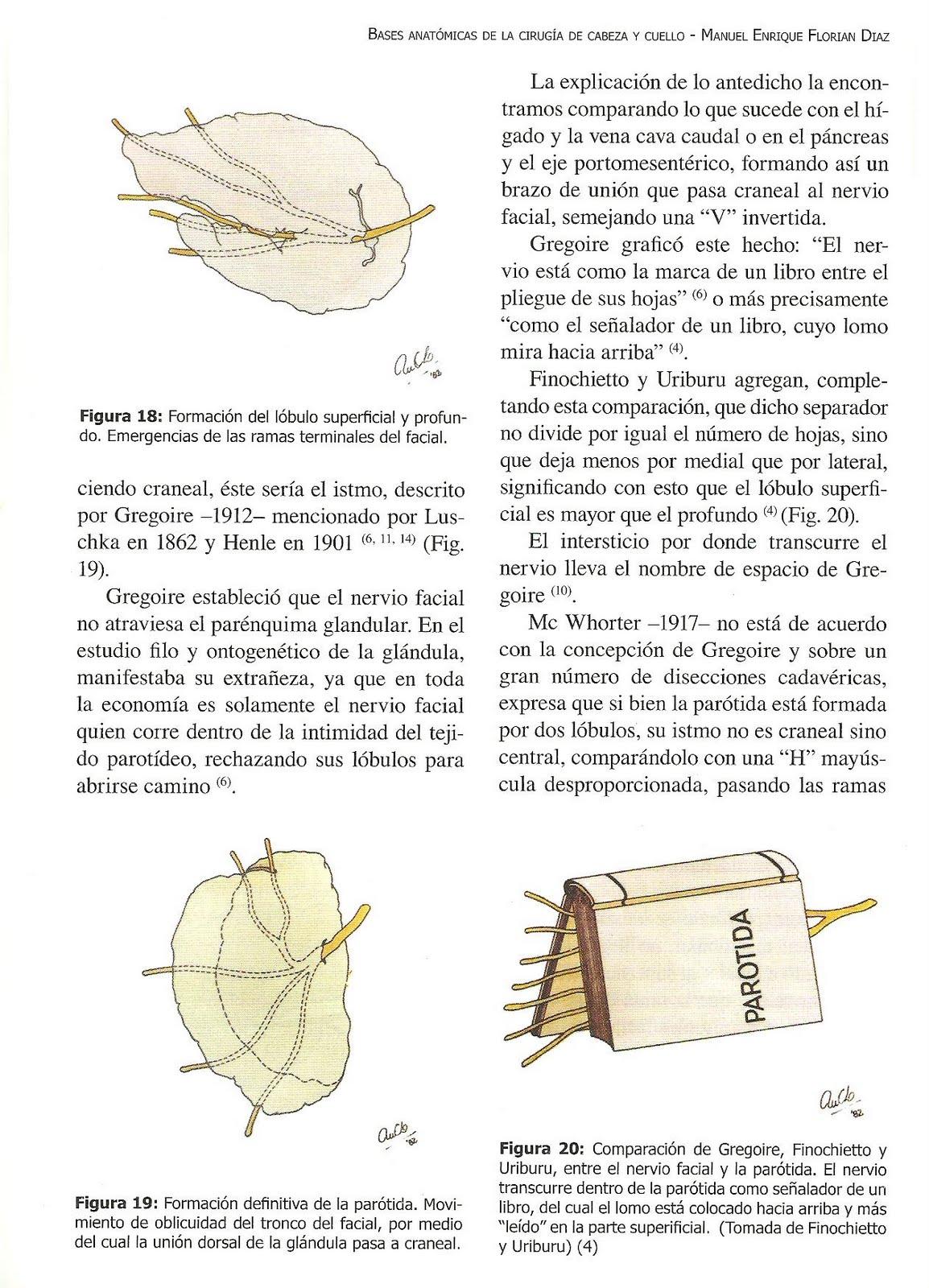 Trabajos de Investigación: LECTURA RECOMENDADA: EMBRIOLOGÍA DE LA ...