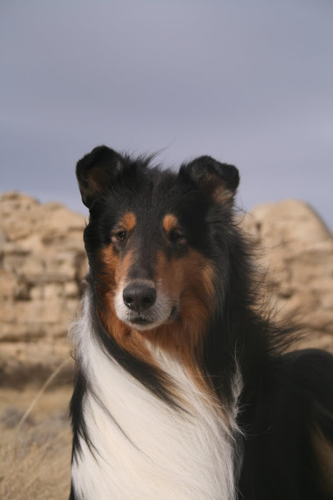 ONE COLLIE